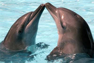 beijonaboca-golfinhos