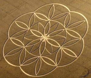 flordavida-cropcircle1