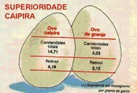 Colesterol11