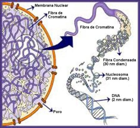 Genoma-Post-23.06.2015-1