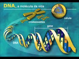 Genoma-Post-23.06.2015-2