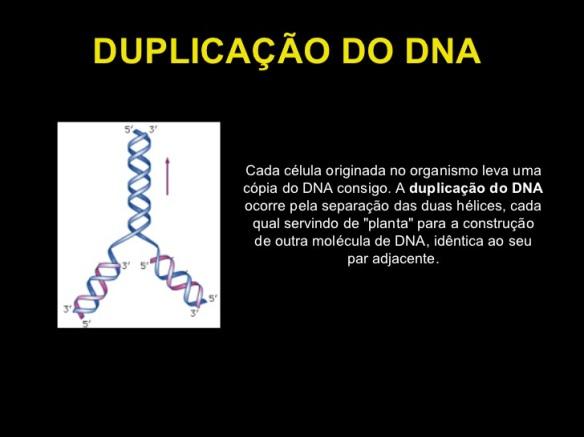 Genoma-Post-01.07.2015-7