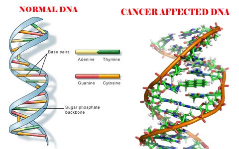Genoma - Post - 10.07.2015-7