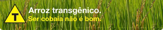 Transgênicos-Post-12.08.2015-31