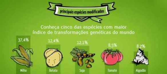 Transgênicos-Post-12.08.2015-39