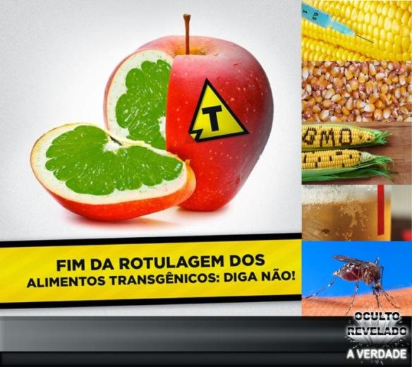 Transgênicos-Post-12.08.2015-4