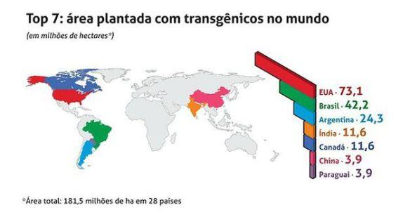 Transgênicos-Post-12.08.2015-41