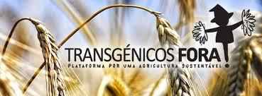 Transgênicos-Post-12.08.2015-5