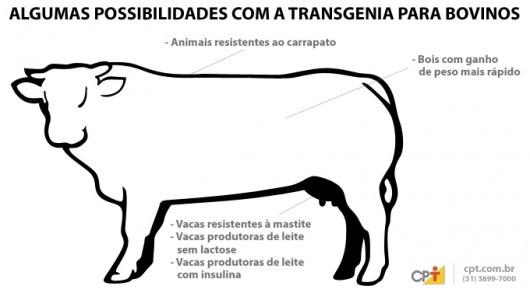 Transgênicos-Post-19.08.2015-11