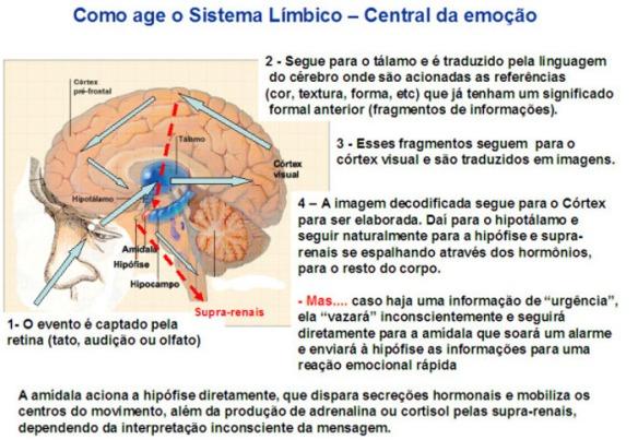 Cérebro-Post-09.10.2015-14