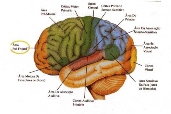 Cérebro-Post-09.10.2015-2