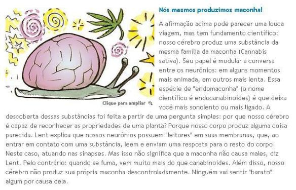 Cérebro-Post-06.11.2015-8