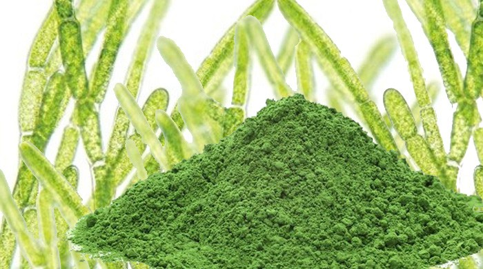 chlorella para que serve