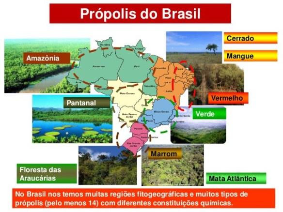 Própolis-Post-29.05.2016-4