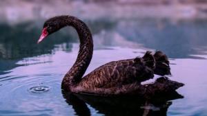 Cisne Negro-Post-07.08.2016