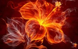 flor-de-fogo