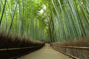 natureza-zen