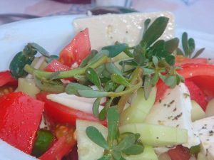 beldroega-salada