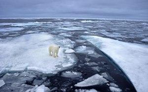clima-terra-degelo-urso-polar